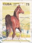 Stamps Cuba -  Caballo Arabe