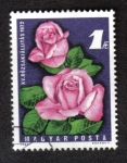 Stamps of the world : Hungary :  XV. Rose Show 1972