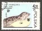 Stamps Poland -  2418 - Zoo de Varsovia, foca gris