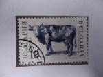 Stamps : Europe : Bulgaria :  Vaca