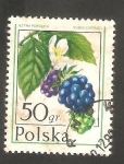Sellos del Mundo : Europa : Polonia : 2316 - Rubus caesius