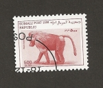 Sellos de Africa - Somalia -  Papio hamadryas