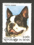 Stamps : Africa : Benin :  Perro de raza, Boston Terrier