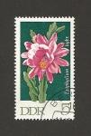 Sellos de Europa - Alemania -  Flor Epiphyllum