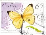 Sellos de America - Cuba -  Mariposa cubana