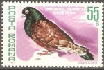Stamps Romania -  AVES.  PORUMBEL  ZBURÀTOR  ORBETEAN.