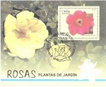 Stamps Cuba -  PLANTAS   DE   JARDIN.   ROSA  HIGHDOWNENSIS.