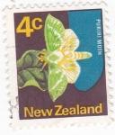 Stamps New Zealand -  Mariposa- puriri moth