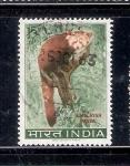 Sellos de Asia - India -  Panda del Himalaya
