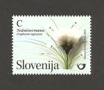 Stamps Slovenia -  Planta Eriophorum vaginatum