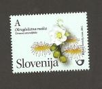 Sellos de Europa - Eslovenia -  Planta Drosera rotundifolia