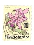 Sellos de America - Guyana -  Orquídea: Cattleya violacea