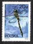 Sellos del Mundo : Europa : Polonia : Cordulegaster Annulatus