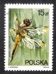 Stamps Poland -  Libélula CZTEROPLAMA