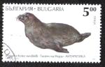 Sellos del Mundo : Europa : Bulgaria : Leptorychotes Weddlli