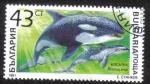 Sellos de Europa - Bulgaria -  Orcinus Orca