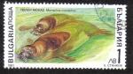 Sellos de Europa - Bulgaria -  Monachus monachus