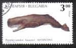 Sellos de Europa - Bulgaria -  Physeter Catodon