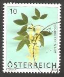 Sellos de Europa - Austria -  2506 - Flor laburnum alpinum