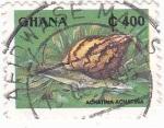 Sellos de Africa - Ghana -  CARACOL