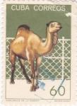 Stamps Cuba -  DROMEDARIO