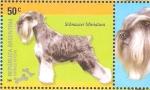 Sellos de America - Argentina -  RAZAS  CANINAS.  SCHNAUZER  MINIATURA.