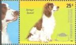 Sellos de America - Argentina -  RAZAS  CANINAS.  SPRINGER  SPANIEL.