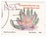 Stamps South Africa -  STAPELIA GRANDIFLORA