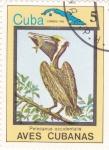 Sellos de America - Cuba -  Pelícanus occidentalis- AVES CUBANAS