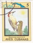 Sellos de America - Cuba -  Melanerpes superciliaris-AVES CUBANAS
