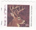 Sellos de America - Canadá -  Venado