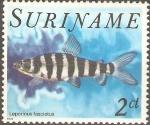 Stamps Suriname -  PECES.  LEPORINUS  FASCIATUS.