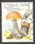 Sellos de Europa - Alemania -  2210 - Champiñón leccinum testaceo scabrum