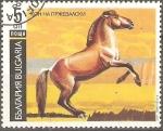 Sellos de Europa - Bulgaria -  CABALLO  DE  PRZEWALSKI