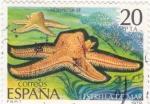 Sellos de Europa - España -  Estrella de mar (15)
