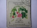 Sellos de Africa - Comores -  Curuba - Passiflora Mollissima