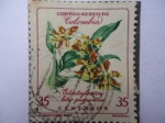 Stamps Colombia -  Odontoglossum Luteo Purpureum