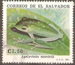 Sellos de America - El Salvador -  ANFIBIOS.  AGALYCHNIS  MORELETII.
