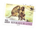 Sellos del Mundo : Africa : Guinea : papio papio