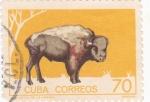 Sellos de America - Cuba -  Bisonte