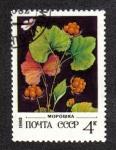 Sellos de Europa - Rusia -  Cloudberry - Rubus chamaemorus