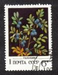 Sellos de Europa - Rusia -  Northern Arándano - Vaccinium uliginosum