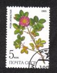 Stamps Russia -  Plantas medicinales Protegidas en Siberia 2