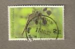Stamps Asia - Thailand -  Semana escritura cartas