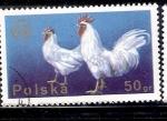 Sellos de Europa - Polonia -  Gallo y gallina