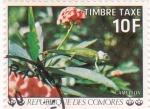 Stamps Comoros -  Camaleón
