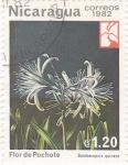 Sellos de America - Nicaragua -  Flor de Pochote - Flora