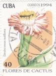 Sellos de America - Cuba -  Flores de cactus