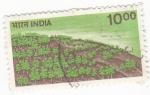 Sellos de Asia - India -  Bosque