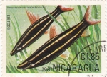 Stamps Nicaragua -  Peces